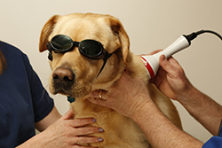 doggles laser
